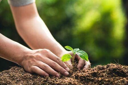 Tavaszi zöldségültetés