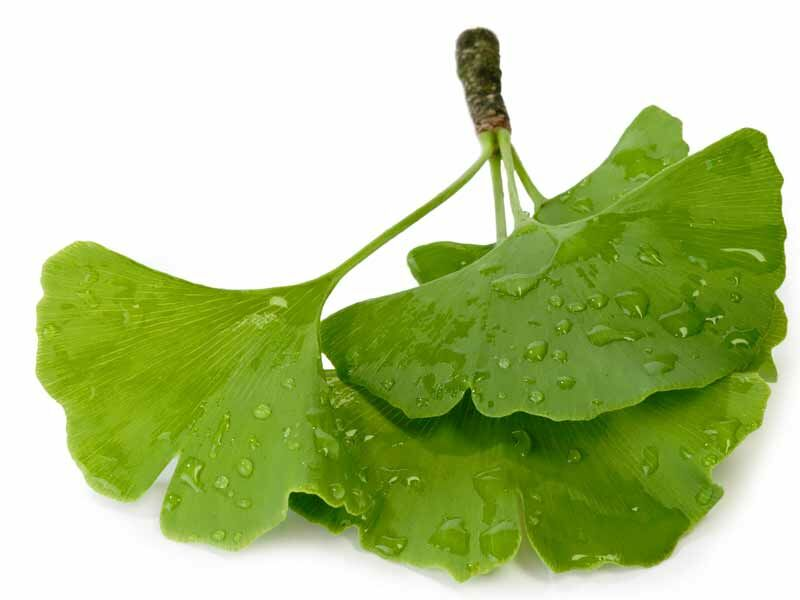 A Ginkgo Biloba jó értágító, ezzel biztosítja a bőr és az izmok jó vérellátását, és még fokozza az anyagcserét is.
