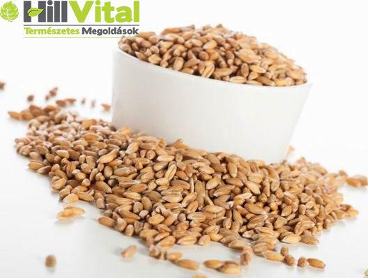 A szemes tönkölybúza jó alapanyag, akár müzlibe is keverhetjük, de rizs helyett köretként is fogyasztható.