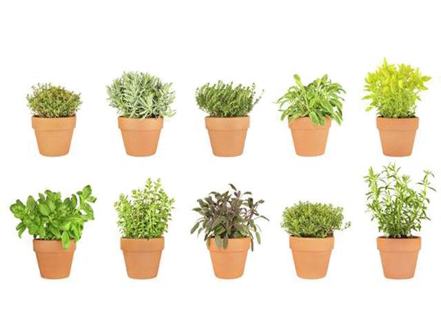 Emésztésserkentő fűszernövények
