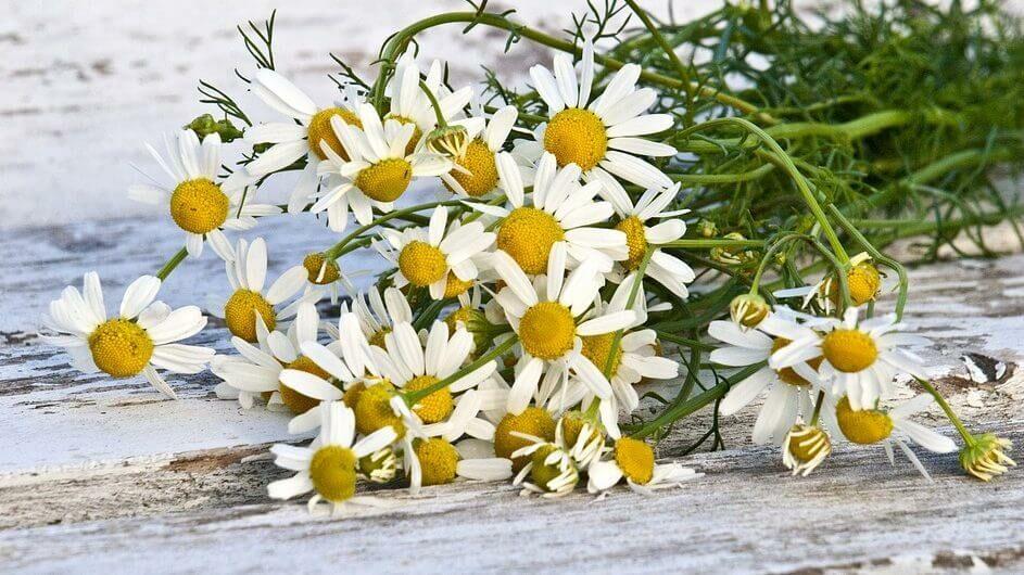 A legjobb bőrápoló gyógynövények