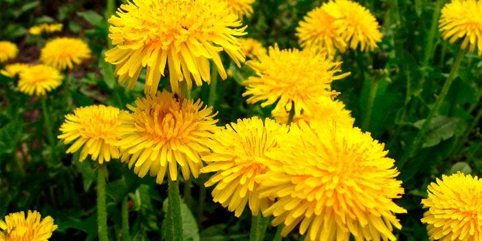 A legjobb tavaszi gyógynövények
