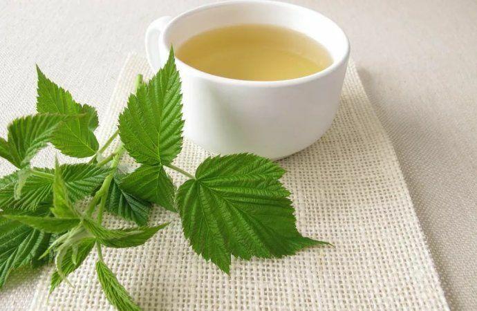 Az erdei málnalevél tea