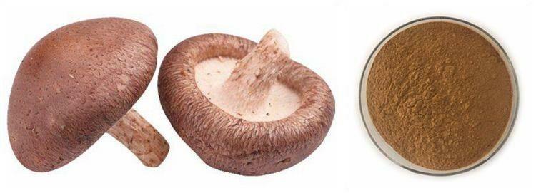 Méregteleníteni is lehet a shiitake gombával!