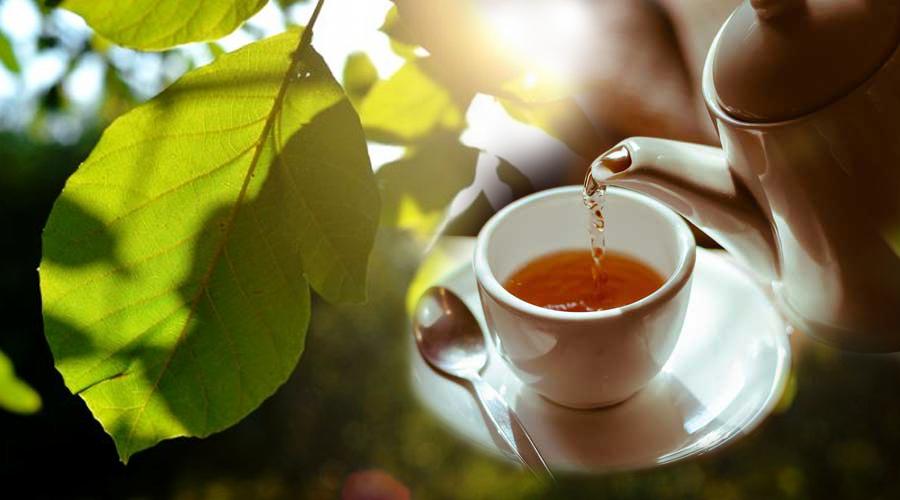 A diófalevél tea hatásai, amelyekről tudnod kell