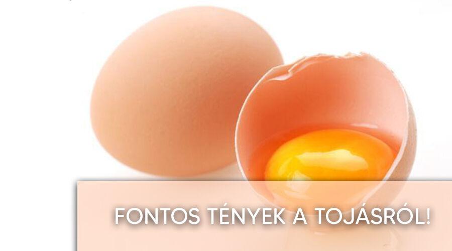 Tények a tojásról.
