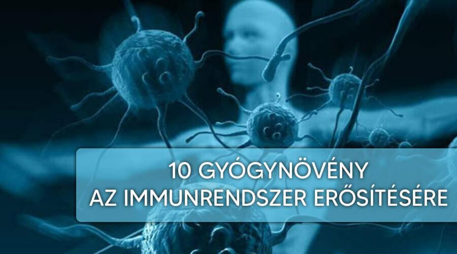 10 gyógynövény az immunrendszer erősítésére.