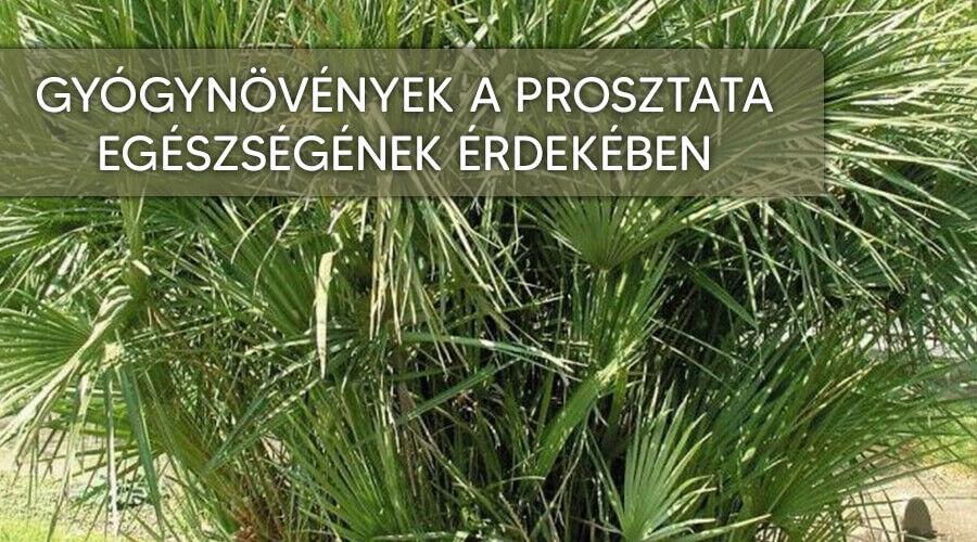 A legjobb gyógynövények a prosztata egészségének az érdekében.