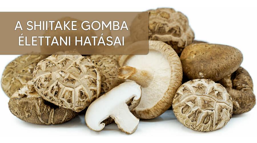 A shiitake gomba nagyszerű élettani hatásai.