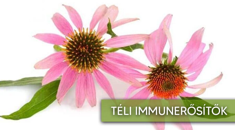 Nagyszerű téli immunerősítő gyógynövények.
