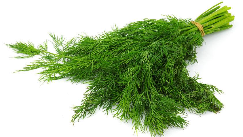 A kapor azon a növények közé tartozik, aminek fogyaszthatóak a magvai és a törzse is.