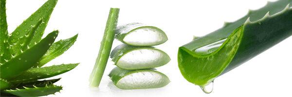 Az Aloe Vera levében természetes rostok vannak, ezek könnyítik az emésztést, és javítják a bélmozgást, ezért nagyon hatásos ez az ital szorulásra.