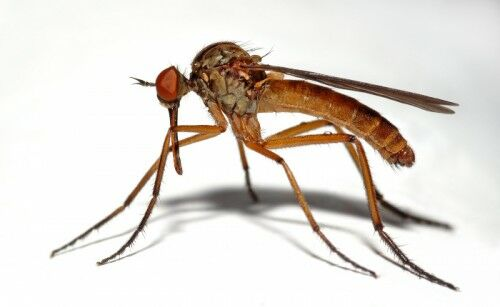 Tudd meg hogyan kell védekezni a szúnyogok ellen.