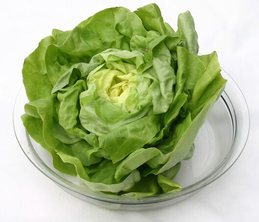 A valamikor Afrikában gyomnövényként honos fejes saláta mára már az egyik legközkedveltebb fitneszeledel.