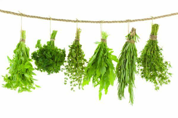 A növény szárait tegyük tepsibe, és 80 fokon szárítsuk a sütőben 4 órán keresztül.