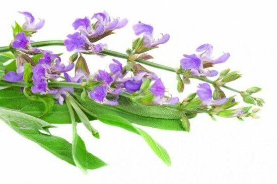 Ismerj meg néhány lázcsillapító gyógynövényt.