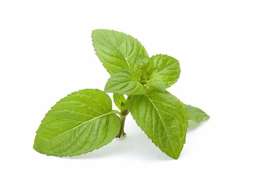 Fájdalomcsillapító gyógynövények. Borsmenta: Olaja rendkívül hatásos fejfájásra. Csak cseppentsünk egy kis vattakorongra néhány cseppet, és dörzsöljük be a halántékunkba.