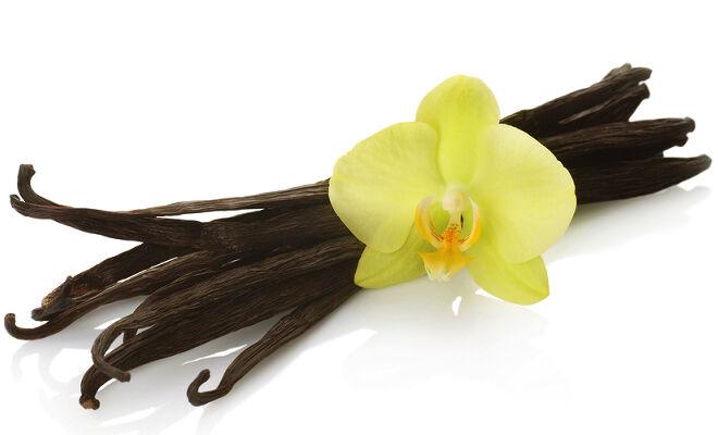 Az illatos vanília. Talán el sem hisszük, hogy a vanília egy virág, mégpedig orchidea! A másik érdekessége,  hogy halványsárga virága mindössze 1 napig nyílik.