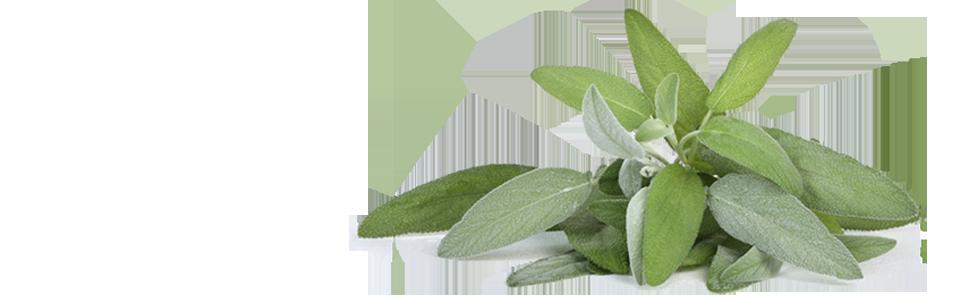 Gyógynövények torokfájásra. A torokfájást a következő gyógynövényekkel csillapíthatjuk: