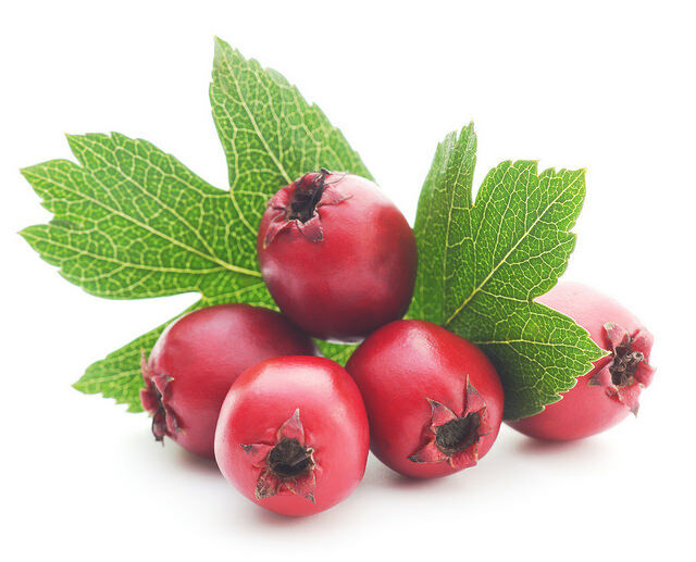 Szívvédő gyógynövények. Gyógynövényekkel szívünk egészsége érdekében.