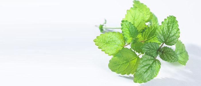 Indiai citromfű élettani hatásai. Mindezek mellett tartalmaz még olyan vegyületeket, amelyek fájdalomcsillapító, gyulladáscsökkentő és antibakteriális hatással rendelkeznek.