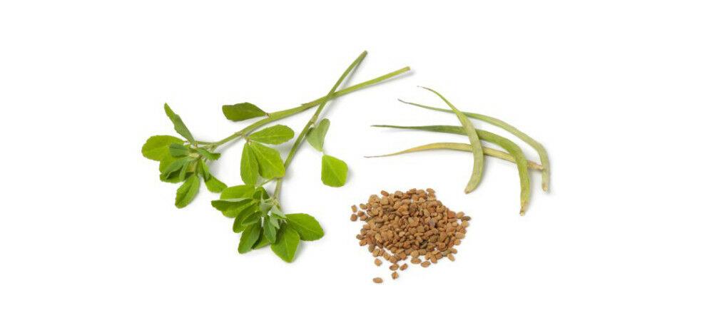 Görögszéna jótékony hatásai, vitamin és ásványi anyag tartalma.