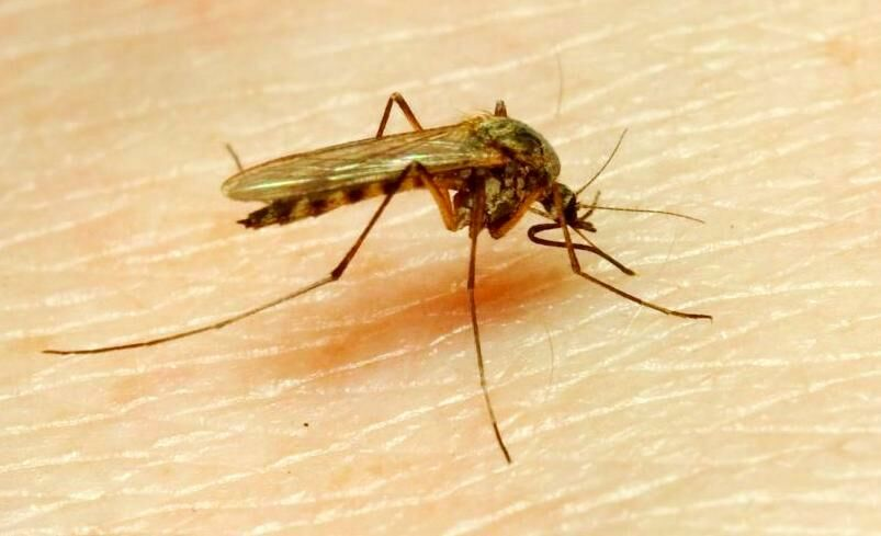 Szúnyogcsípés elleni tippek