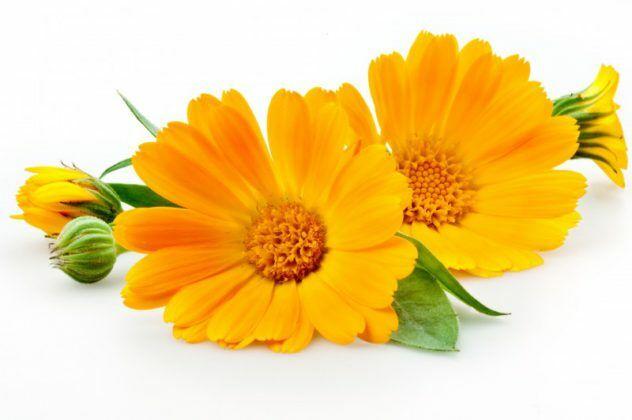 HillVital - Körömvirág jótékony hatásai