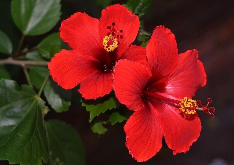 Most ismerj meg néhány ehető virágot, amelyeknek magas a vitamin tartalma.