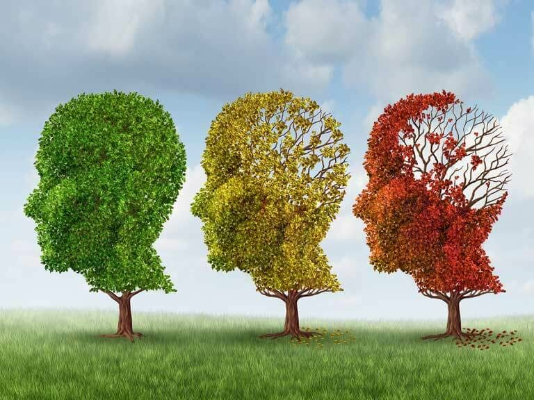 Gyógynövényekkel az alzheimer-kór legyőzése érdekében.