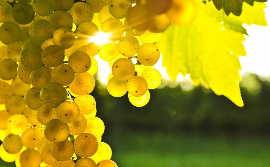 A szőlő pozitív hatása szervezetre