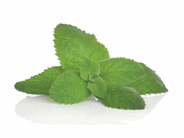 A citromfű számtalan problémára megoldást nyújthat. Fenolsavjainak köszönhetően segít a pajzsmirigy túlműködésben is.