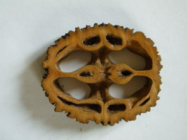 Feketedió: A gyümölcsét és a kérgét is használják gombásodás ellen.