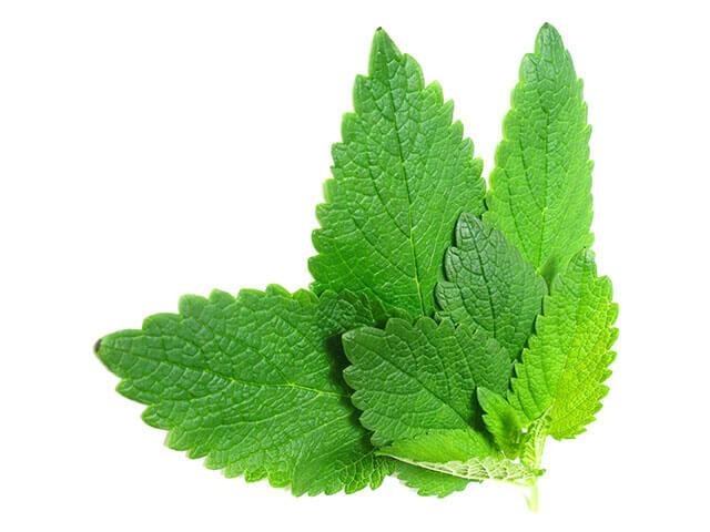 Fűszerként is igencsak megállja a helyét, ugyanis salátákhoz, de édességekhez is kiváló ízesítő lehet.