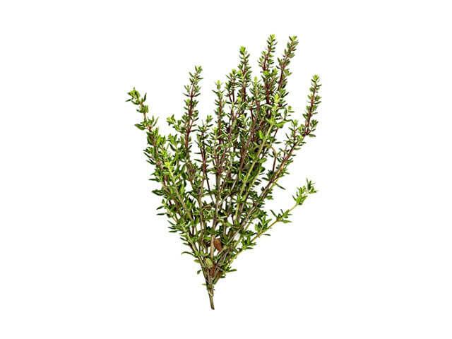 Kakukkfű: Jól ismert gyógynövény, sokan használják fájdalomcsillapításra, asztmás tünetek enyhítésére. Fő hatóanyaga a timol, nagyon hasznos fertőtlenítő szer.