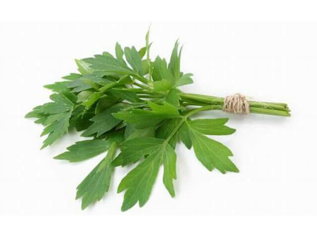 Szaporíthatjuk helybevetéssel vagy tőosztással. Márciusban vessük el a magokat! Ültessük 1-3 cm mélyre, 60 cm-es sorokba. Virága, levele és gyökere is ízesít.