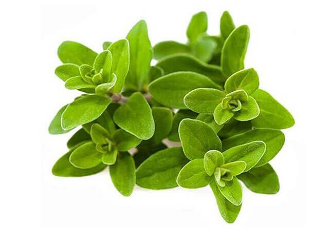 A majoránna kiváló emésztésjavító, hasfájáscsökkentő és egyben görcsoldó. A belőle készült tea enyhíti a puffadást és a hasi görcsöket.