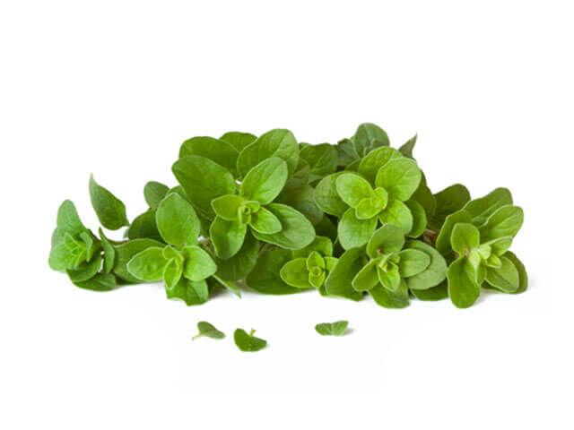 Oregáno: Ételízesítőként használják, de gombaölő tulajdonságokkal is rendelkezik, emellett a lúgosító étrendbe is beleillik.