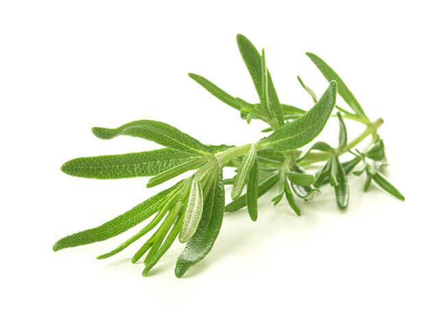 Rozmaring: Ez a fűszernövény is baktérium- és gombaölő, valamint fájdalomcsillapító hatású. Ajánlott gyakran használni ízesítésnek a hatások miatt.