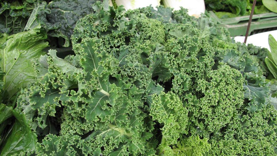 Méregtelenítő zöld növények