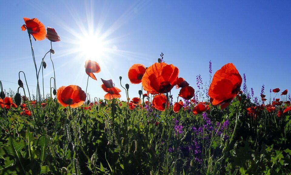 Az éltető napfény hatása