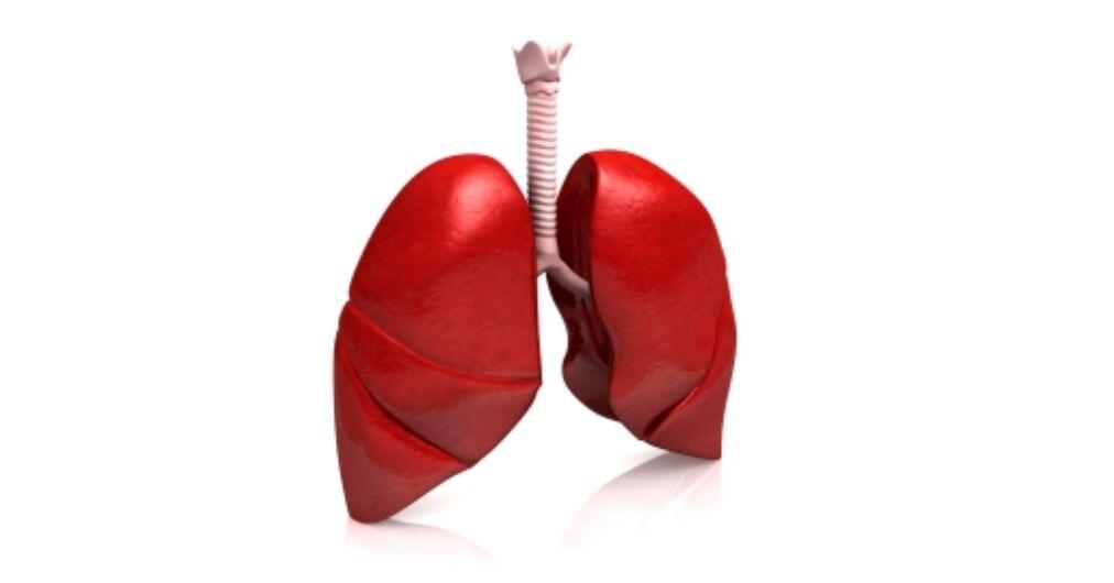 Így tudjuk megtisztítani tüdőnket 3 nap alatt! | gvk-egyesulet.hu