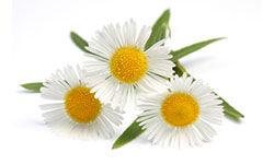 Nagyon hatásos pattanásos bőr kezelésére, bőrbetegségekre, arctisztításra, gyulladás csökkentésére.