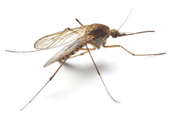 Ezektől a rovaroktól tartsd magad távol.