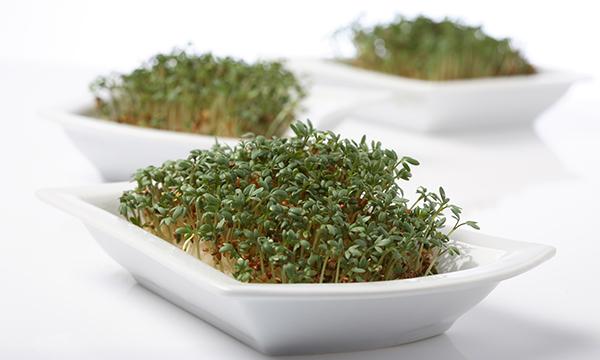 Gyógynövények pajzsmirigyre