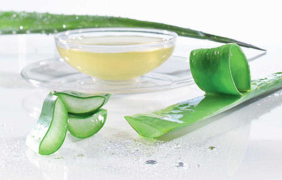 Az aloe vera felhasználása