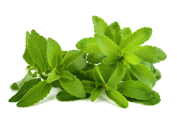 Stevia az édes gyógynövény