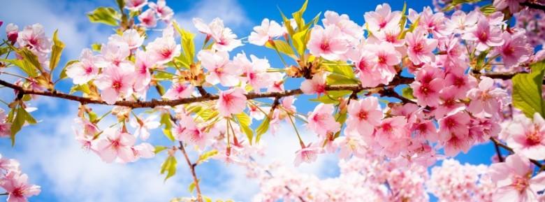 A tavasz előnyei.